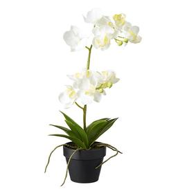 image-Faux Potted Mini Orchid - White