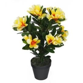 image-Floor Alpine Rhododendron Plant in Pot Marlow Home Co. Flower Colour: Yellow