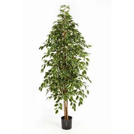 image-Baluno Floor Ficus Tree in Pot artplants.de Size: 150cm H x 65cm W x 65cm D, Flower/Leaves Colour: Green/White