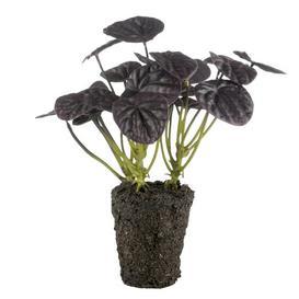 image-Flora Dollar Desktop Foliage Plant Lene Bjerre