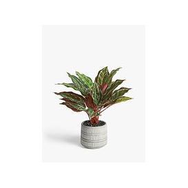 image-John Lewis & Partners Artificial Stromanthe Bush Plant