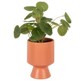 image-Artificial pilea and terracotta ceramic pot