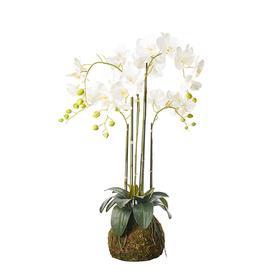 image-Faux Planted Phalaenopsis Orchid, Medium - White