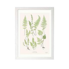 image-East End Prints Ferns By Aster A3 Framed Print