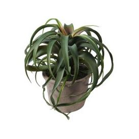 image-Faux Tillandsia Plant in Pot