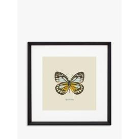 image-Appias Cardena Butterfly - Framed Print & Mount, 45.5 x 45.5cm, Yellow/Multi