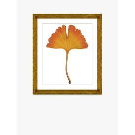 image-Ginkgo Leaf 1 - Framed Print & Mount, 56 x 46cm, Orange