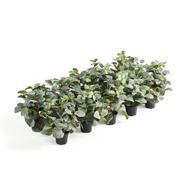 image-Plants to fit Modulus top tray, 10 pcs of artificial Fittonia