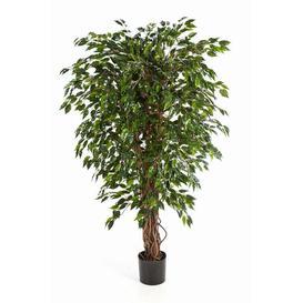 image-Daku Floor Fig Tree in Pot artplants.de Size: 180cm H x 80cm W x 80cm D, Flower/Leaves Colour: Green/White