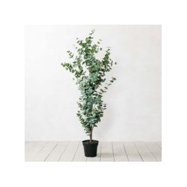 image-Faux Potted Eucalyptus Tree