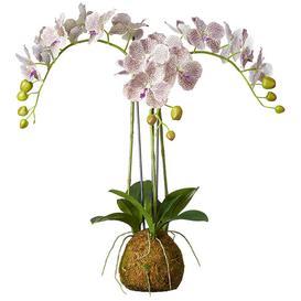 image-Small Faux Planted Phalaenopsis Gigantea Orchid  - Purple