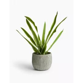 image-M&S Artificial House Plant in Textured Pot - 1SIZE - Green, Green