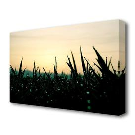 image-'Green Dew Grass In The Morning Light Landscape' Photographic Print on Canvas East Urban Home Size: 50.8 cm H x 81.3 cm W