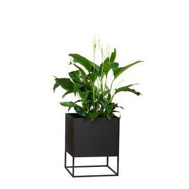 image-Crismatt Square Pedestal Plant Stand