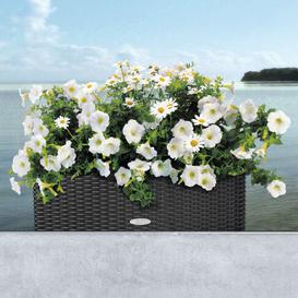image-Balconera Self-Watering Balcony Planter Lechuza Colour: Mocha, Size: 19 cm H x 50 cm W x 19 cm D