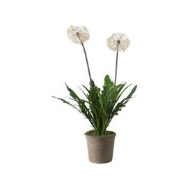 image-Faux Dandelion in Chestnut Painted Planter