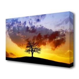 image-'Tree In The Morning Light Landscape' Photographic Print on Canvas East Urban Home Size: 81.3 cm H x 121.9 cm W
