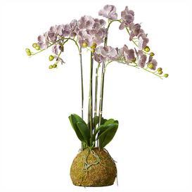 image-Large Faux Planted Phalaenopsis Gigantea Orchid  - Purple