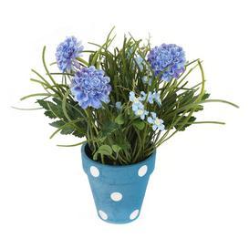 image-Desktop Chrysanthemum Plant in Pot Brambly Cottage Flower Colour: Blue