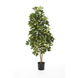 image-Samantha Floor Schefflera Tree in Pot artplants.de Size: 170cm H x 55cm W x 55cm D, Flower/Leaves Colour: Green/White