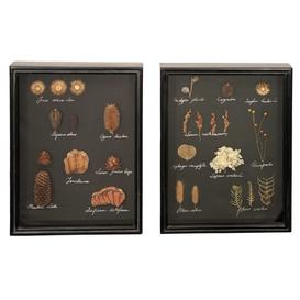 image-Pair of Framed Dried Foliage Wall Art