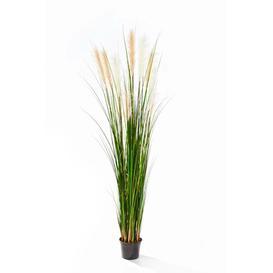 image-Kilian Floor Bushgrass in Pot artplants.de