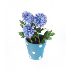 image-Desktop Chrysanthemum Plant in Pot with Gift Box