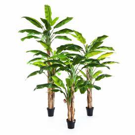 image-Amaru Banana Floor Tree in Pot artplants.de Size: 240cm H x 100cm W x 100cm D