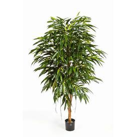 image-Hisa Floor Longjack Tree in Pot artplants.de Size: 180cm H x 110cm W x 110cm D