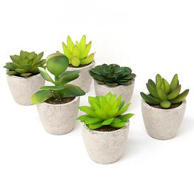 image-Set Of 6 Artificial Faux Succulent Plants - M&w