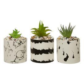 image-Linehan Succulent Fern Planter Ebern Designs