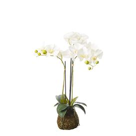 image-Faux Planted Phalaenopsis Orchid, Small - White