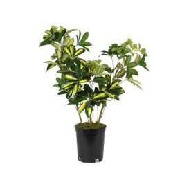 image-Artificial Tree in Black Pot