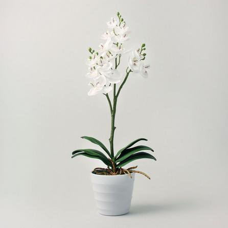 image-Artificial Orchid Cream in Pot 44cm Cream