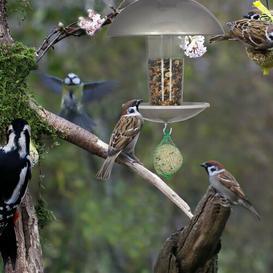 image-Lanoue Bird Feeder Dakota Fields