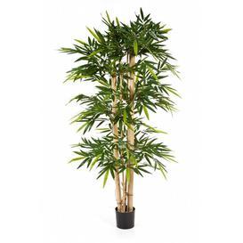 image-Kisho Floor Bamboo Tree in Pot artplants.de Size: 210cm H x 100cm W x 100cm D