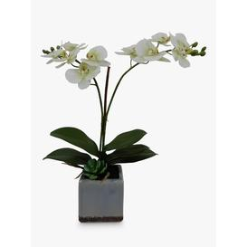 image-John Lewis & Partners Artificial Orchid in Ceramic Planter