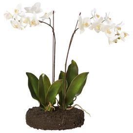 image-Faux Planted Phalaenopsis Orchid With Flat Bulb Base - White