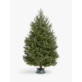 image-John Lewis & Partners Fraser Fir Real Christmas Tree