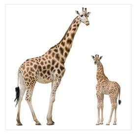 image-Giraffe Mother and Child Semi-Gloss Wallpaper Roll East Urban Home Size: 1.92m x 192cm, Material quality: Standard (110g/m)