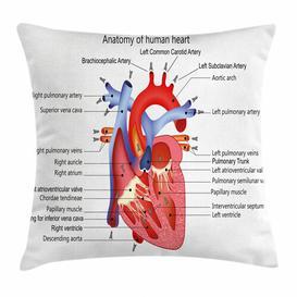image-Samirah Educational Human Body Organ Outdoor Cushion Cover Ebern Designs Size: 50cm H x 50cm W