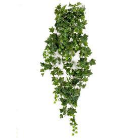 image-Hanging Bush Ivy Plant Dakota Fields