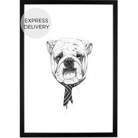 image-Cooldog by Balazs Solti, 30 x 40cm Wall Art Print