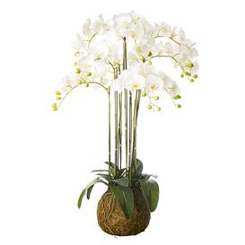 image-Faux Planted Phalaenopsis Orchid, Large - White
