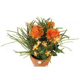 image-Desktop Chrysanthemum Plant in Pot Brambly Cottage Flower Colour: Deep Orange