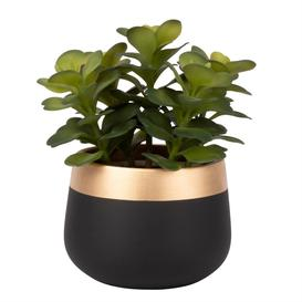 image-Artificial Succulent in Ceramic Black and Gold Pot
