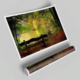 image-'Empty Bench in Fall Scene' - Unframed Photograph Print on Paper East Urban Home Size: 42 cm H x 59.4 cm W