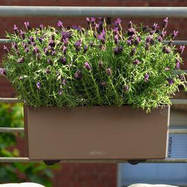 image-Balconera Plastic Self-Watering Balcony Planter Lechuza Colour: Nutmeg, Size: 19 cm H x 79 cm W x 19 cm D