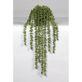 image-Desktop/Hanging Senecio Plant in Pot