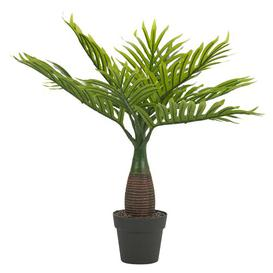 image-Palm Plant in Pot Bay Isle Home